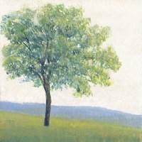 Solitary Tree I Framed Print
