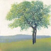 Solitary Tree II Framed Print