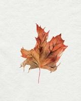 Watercolor Autumn Leaf II Framed Print