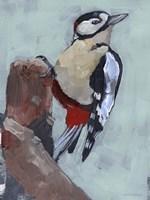 Woodpecker Paintstrokes II Framed Print