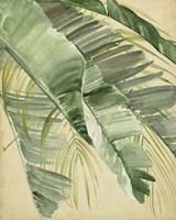 Banana Palms I Framed Print