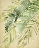 Banana Palms II Framed Print