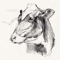 Holstein Portrait Sketch II Framed Print