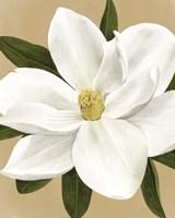 Magnolia on Gold I Framed Print
