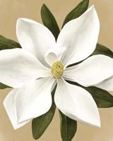 Magnolia on Gold II Framed Print