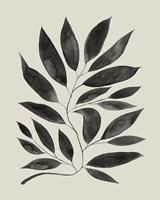 Branched Composition II Framed Print