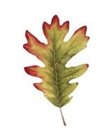 Fall Leaf Study II Framed Print