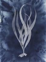 Midnight Kelp I Framed Print