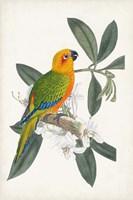 Tropical Bird & Flower I Framed Print