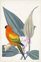 Tropical Bird & Flower IV Framed Print