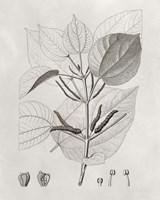 Vintage Leaves III Framed Print