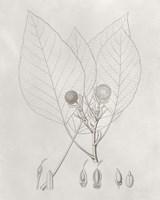 Vintage Leaves V Framed Print
