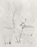 Vintage Leaves VI Framed Print