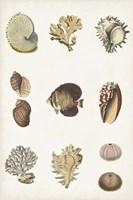 Antique Coastal Chart I Framed Print