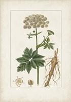 Antique Turpin Botanical I Framed Print