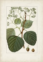Antique Turpin Botanical IV Framed Print
