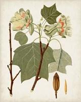 Antique Leaves III Framed Print