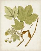 Antique Leaves IV Framed Print
