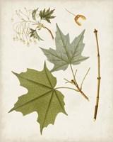 Antique Leaves VII Framed Print