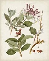 Vintage Flowering Trees III Framed Print