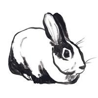 Winter Rabbit I Framed Print