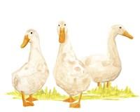 Quack Squad II Framed Print