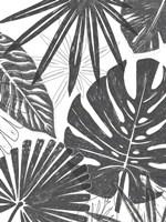 Palm Shadows II Framed Print