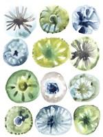 Sea Urchin Assortment I Fine Art Print