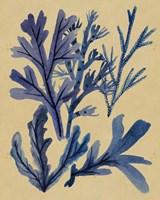 Underwater Forest IV Framed Print
