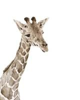 Safari Animal Portraits II Framed Print