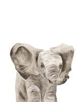 Safari Animal Portraits III Framed Print