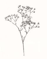 Wild Bloom Sketch I Framed Print
