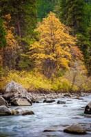 Autumn Across The River Framed Print