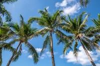 Palawan Palm Trees I Fine Art Print