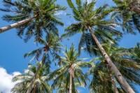 Palawan Palm Trees II Fine Art Print