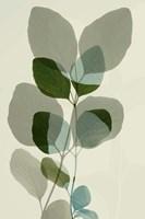 Green Leaves 10 Framed Print
