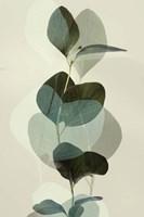 Green Leaves 8 Framed Print