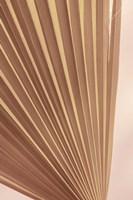 Pastel Fan 2 Framed Print