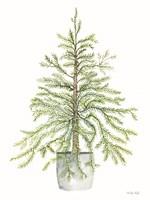Pine Tree in Pot I Framed Print