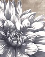 Charming Floral I Framed Print