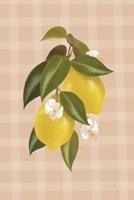 Lemon Botanical I Framed Print