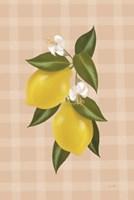 Lemon Botanical II Framed Print