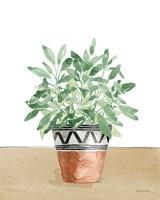 Herb Garden V White Framed Print
