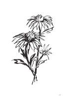 Line Echinacea III Framed Print