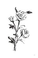 Line Ranunculus II Framed Print