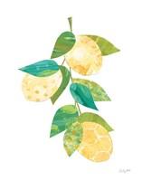 Summer Lemons II Framed Print