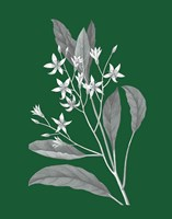 Green Botanical V Framed Print