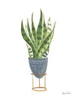 Green House Plants IV Framed Print