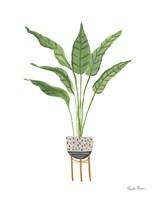 Green House Plants III Framed Print