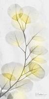 Eucalyptus Sunshine 1 Framed Print